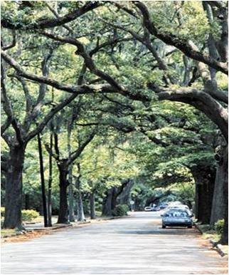 Savannah's must see urban forest