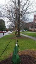 Agnes Scott College Honor Tree