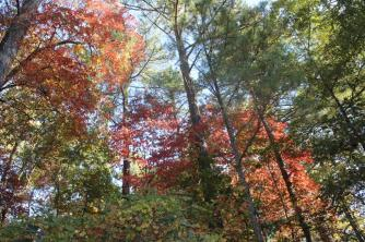 bear-gap-road-sourwoods-habersham-county-10-19-16