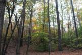 Late season green - Stephens County