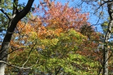 Maples on Brasstown Bald 10-18-17