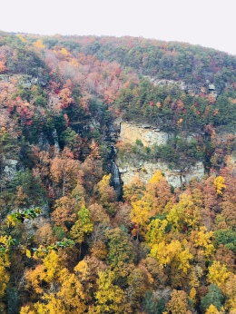 Cloudland Canyon Area 11-06-17