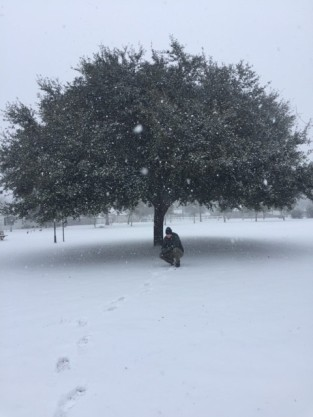 A live oak in Claxton, Georgia in the snow - January 3, 2018