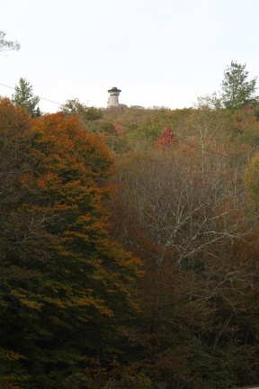 A Red Maple Changing Below Brasstown Bald_GA 180 Spur_Union County 10-23-18