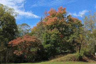Dogwood and Maple in Suches 10-17-18