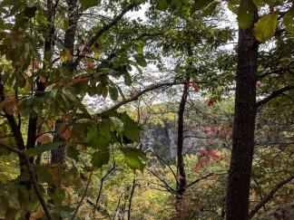 oak blakgum and sourwood NW