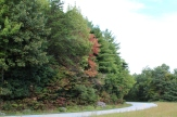 This Maple Is A Perenial First Turner - Fall Color Cant Be Far Away 10-02-18 Richard B Russell Scenic Hwy