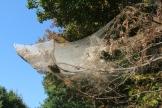 webworm 2
