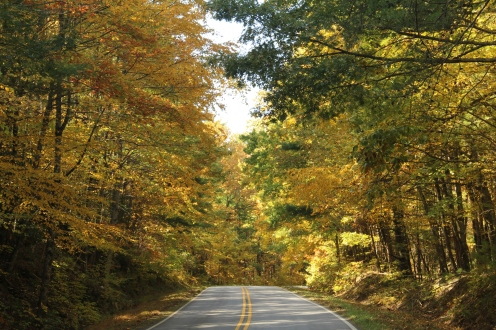 Birch Lined Drive_GA 348_White County_10-30-18
