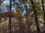 Brown white oak NW