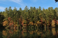 Color Along the Shore of Seed Lake_Rabun County_10-30-18