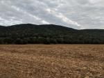 Mountain Cove Farms (1)