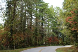 Sourwood and Maple Along Seed Lake Road - Rabun County 10-15-19 (1)